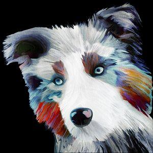 Colourful Collie Dog - Karen Harding Artist