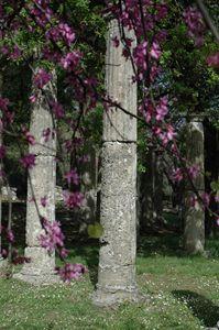 Olympia Pillars