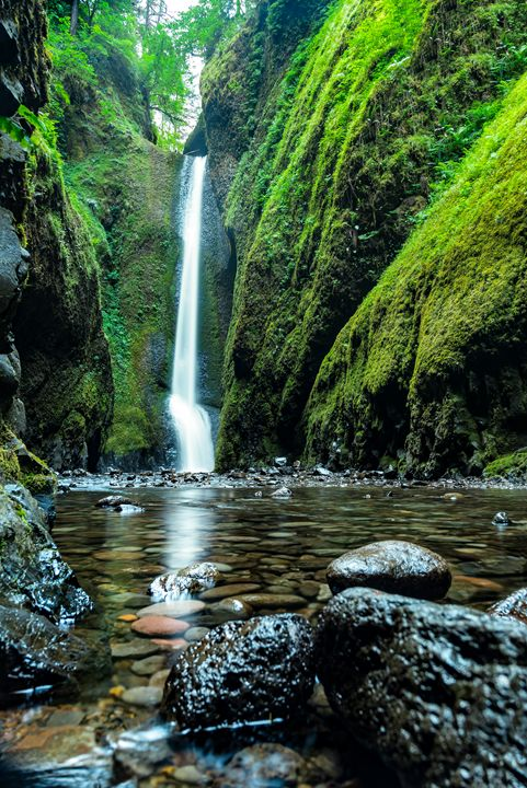 Forest Waterfall - Mark McElroy