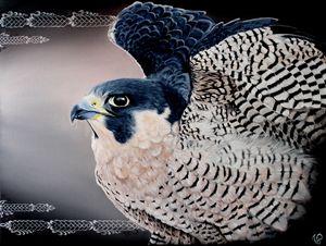 Falcon - V/S art