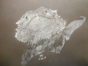 Pogo The Bearded Dragon - JMC Arts & Crafts