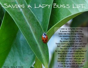 Saving A Lady Bugs Life
