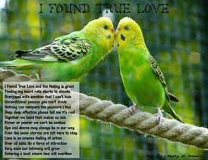 I Found True Love