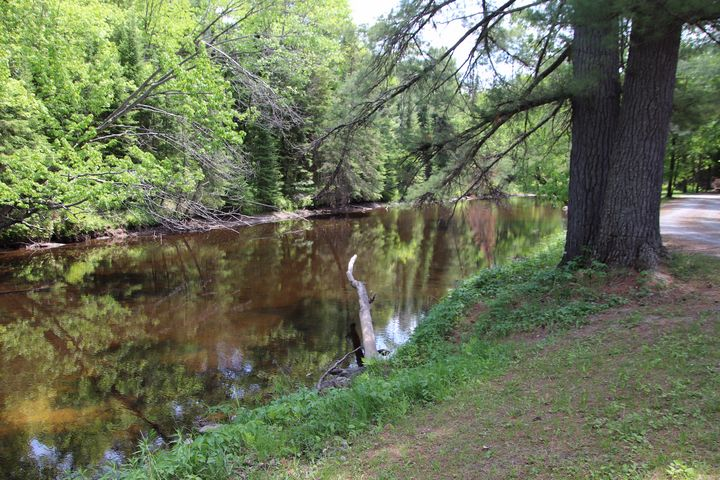 Eel Creek - MdAnjos Photography