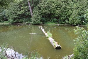 Floating Log