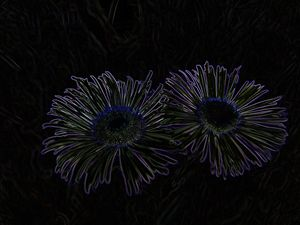 2 Flowers Etched