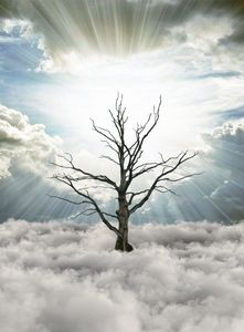 Tree over the clouds