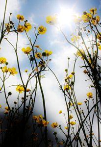 In a Field. - Lens Print