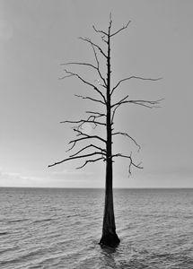 Tree. - Lens Print