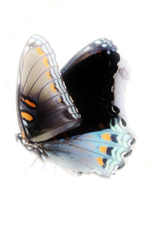Butterfly - Lens Print