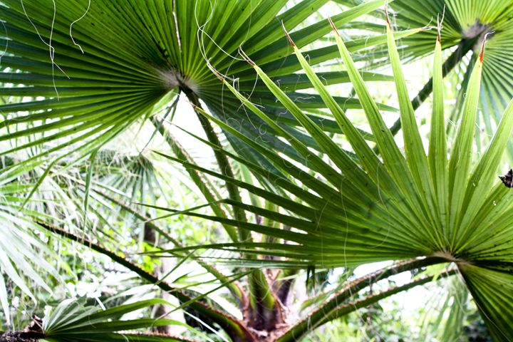 Palm Leaves - Brittany Renner Photography
