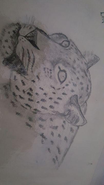 Leopard - Joshua Osswald
