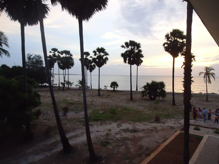 Palm tree near beach - Arunadeepa Lelwala