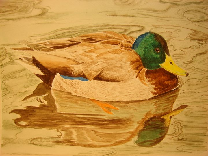 Mallard Duck - Michele L. Squibb