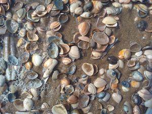 Sea shells and bubbles