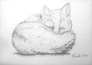 Watchful Fox