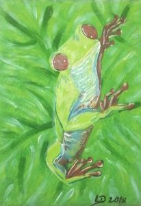 Amazon Red-Eyed Tree Frog