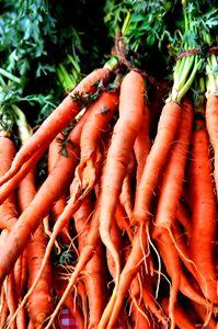 Carrots - Katia Lima