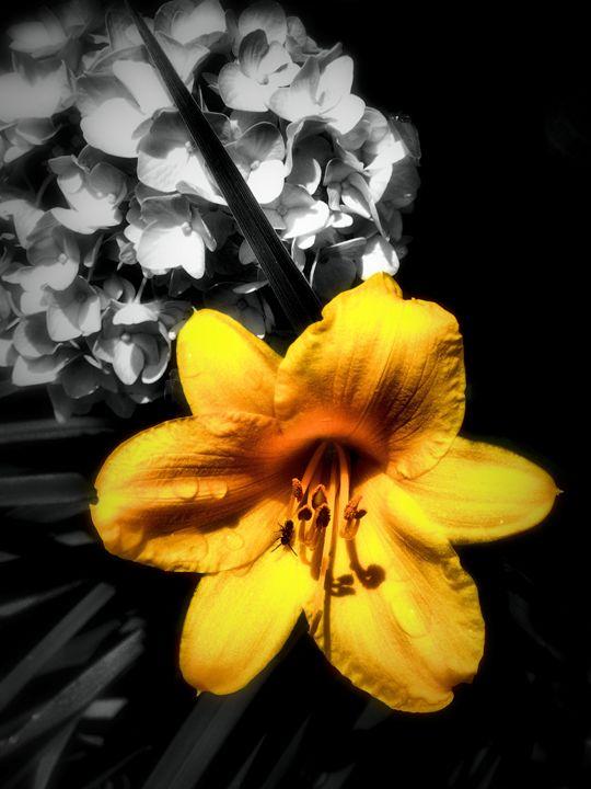 Yellow flower katia lima photography flowers plants trees yellow flower katia lima mightylinksfo