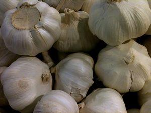 Garlic - Katia Lima