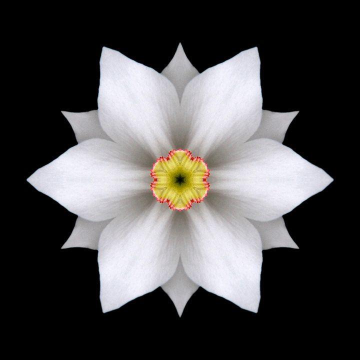White Daffodil II - Flower Mandalas