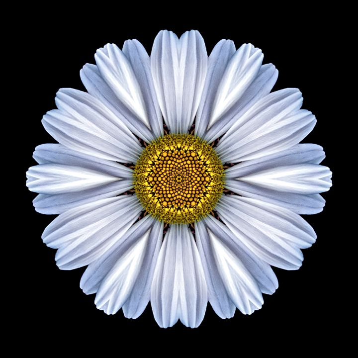 White Daisy I - Flower Mandalas