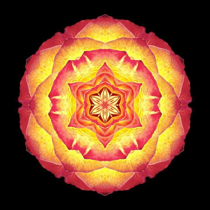 Yellow and Red Rose III - Flower Mandalas
