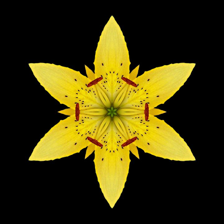 Yellow Lily I - Flower Mandalas