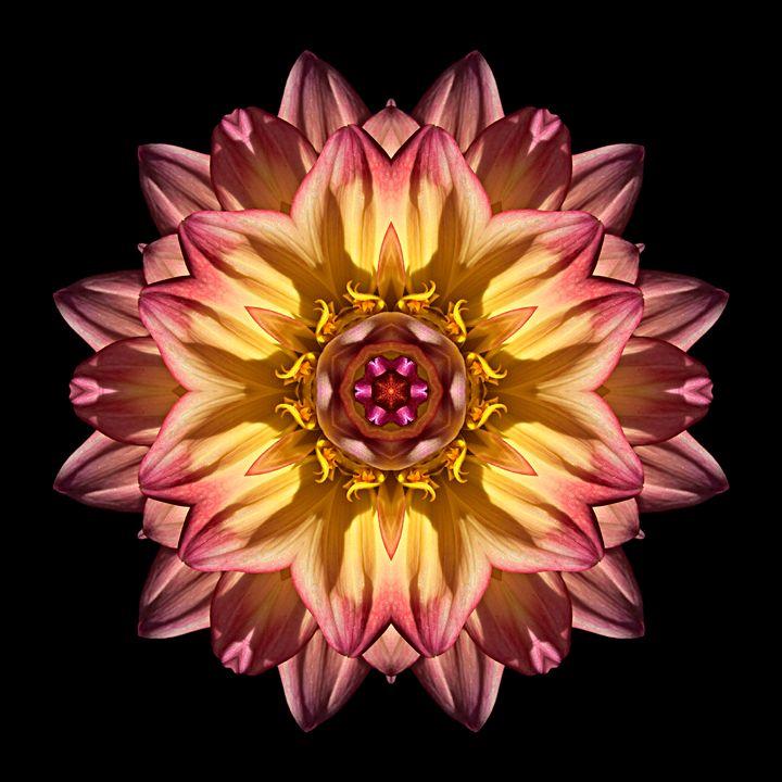 Red and Yellow Dahlia IV - Flower Mandalas