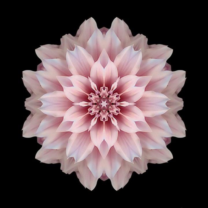 Pink Dahlia I - Flower Mandalas