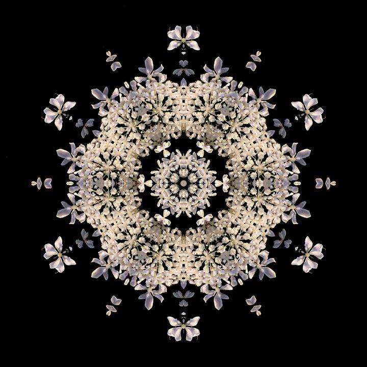 Queen Anne's Lace I - Flower Mandalas