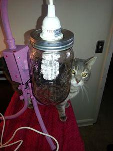 V-Day Lamp