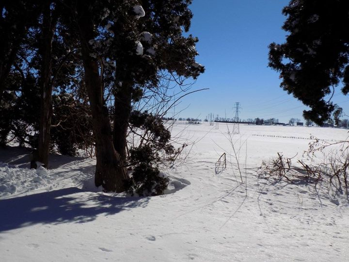 Snow - Alyssa Nichole
