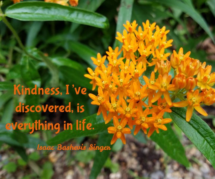 Kindness - Gracelyn Lavender Mulkey