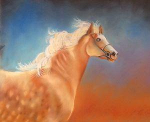 Wild Irish Horse Run Free