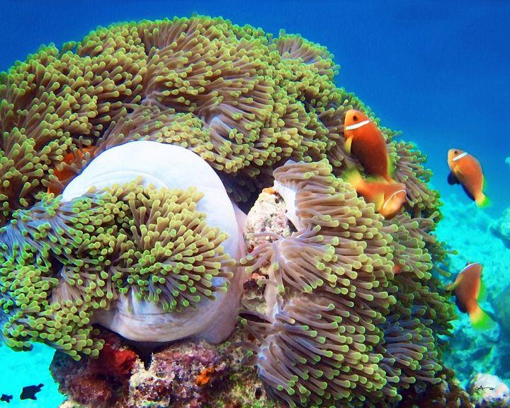 world leading dive destination-Maldi - Angelo