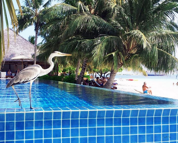 Bird/maldives - Angelo
