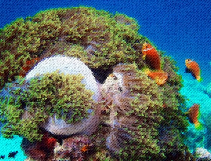 World-leading-dive-destination-maldi - Angelo