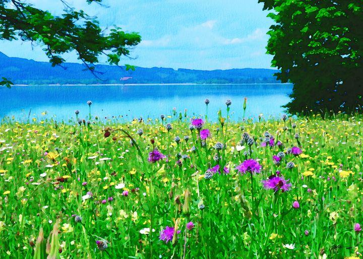 Meadow flowers bloom - Angelo