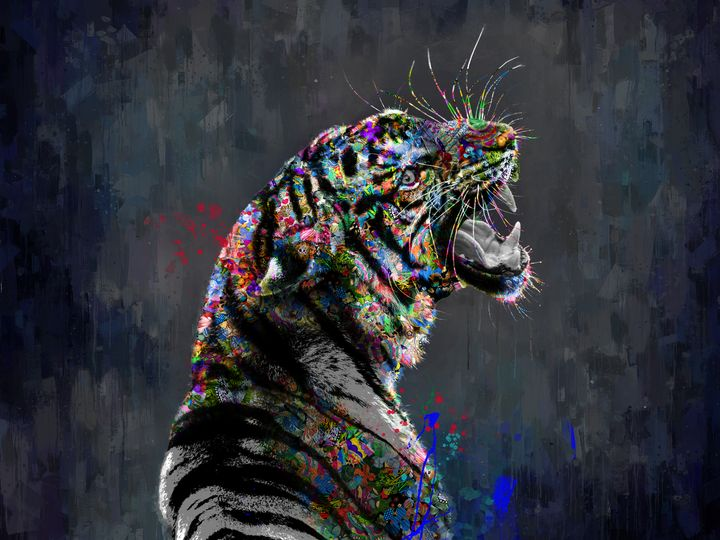 Tiger - Angelo