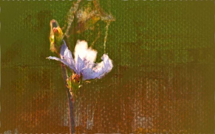 Blue and White Flower - Csaba Deak Art Creations