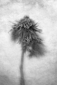 Prickaly Plant