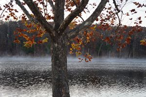 Missouri fall leaves over lake.