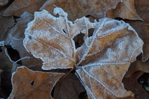 Morning Frost on Leaf