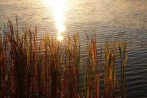 wetland sunrise