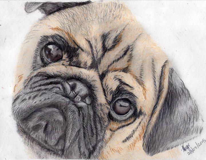 Winston The Pug - Florence Kruger