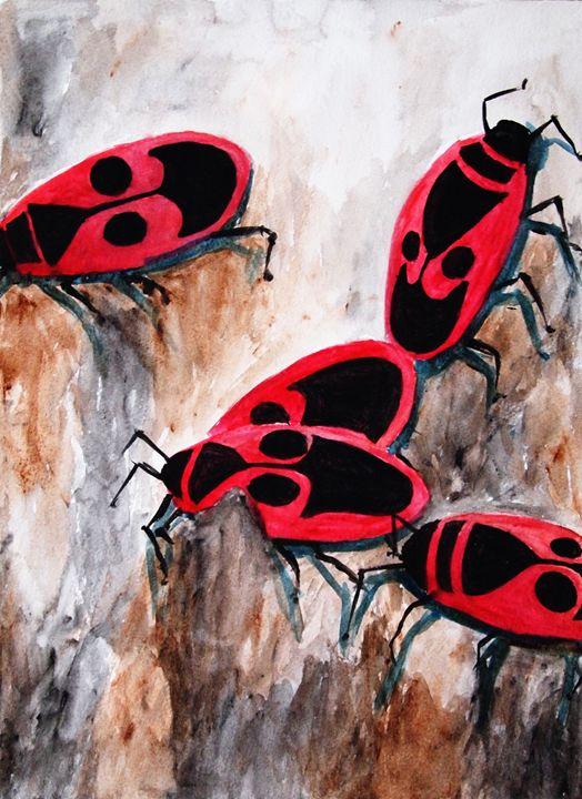 Pyrrhocoridae ( Firebugs ) - Symplisse Art
