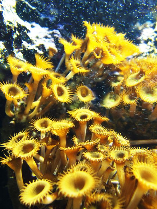 Vibrant yellow sealife - Symplisse Art
