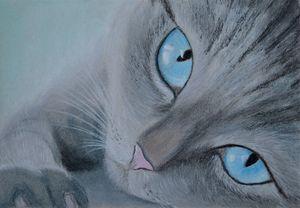 cat close-up look