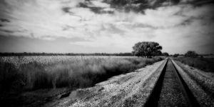 Tree and Tracks